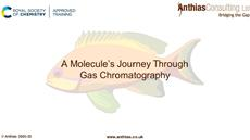 A molecule's journey through gas chromatography